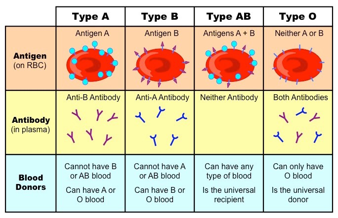 Words... abo blood group genetics consider