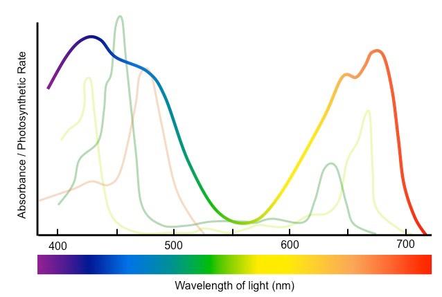 Action Spectrum Bioninja