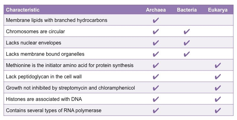 Archaebacteria Vs Eubacteria Cell Wall