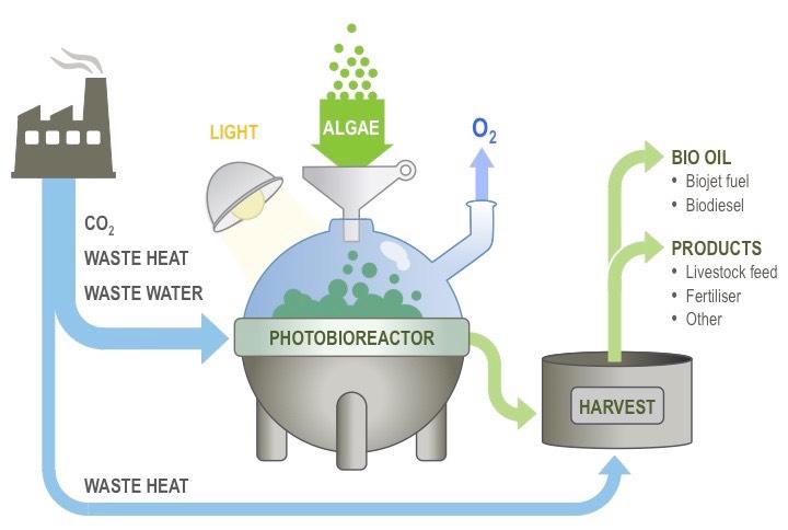 bio fuels essay biofuels are fuels made from biomass essay