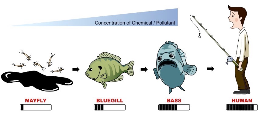 click on the diagram to show representation of chemical concentration and  relative toxic effects