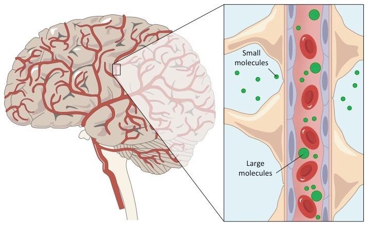 Microbubble dose