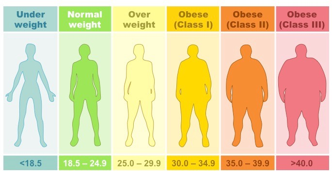 Body Mass Index | BioNinja