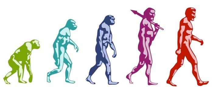Evolution   BioNinja