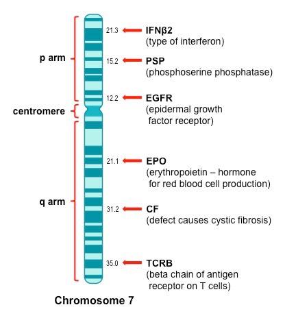 Identifying Genes | BioNinja on