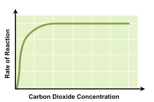 CO2 concentration photosynthesis