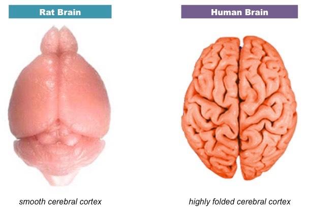 cortex comparison