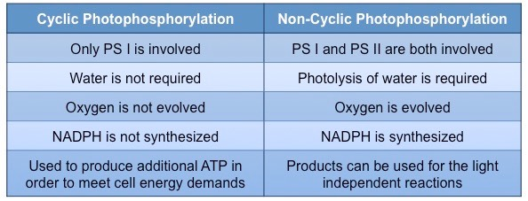 Photophosphorylation | BioNinja