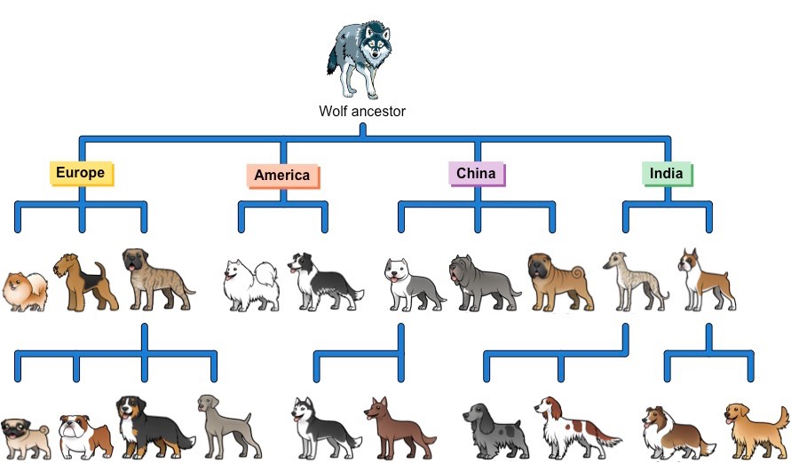 history and evolution of dogs From pekingese to st bernard and greyhound, dogs come in such startling variety it's easy to forget they belong to the same species the profusion of breeds today -- at least 150 -- reflects intense, purposeful interbreeding of dogs in the past 150 years at the same time, the entire history of.
