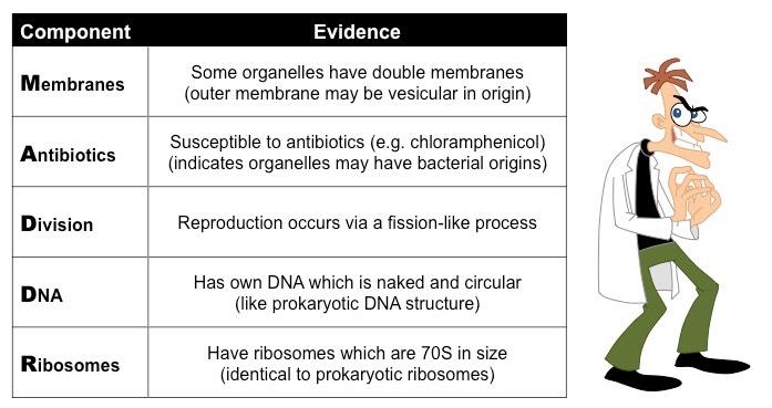 Endosymbiosis Bioninja