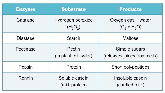 enzyme table 1