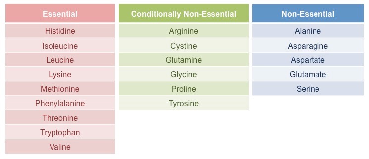 essential and non essential amino acids What is the difference between essential and non-essential proteins  difference between essential amino acids and non-essential amino acids.