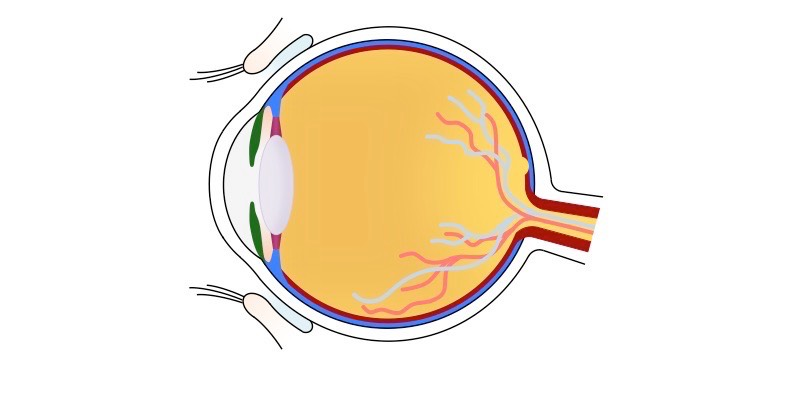 Eye Unlabelled Med on Unlabeled Eye Diagram Basic