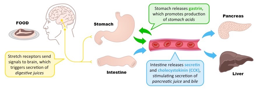what is gastric juice made of