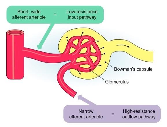Ultrafiltration | BioNinja