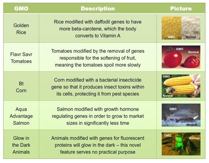 Genetically modified organisms essay sample