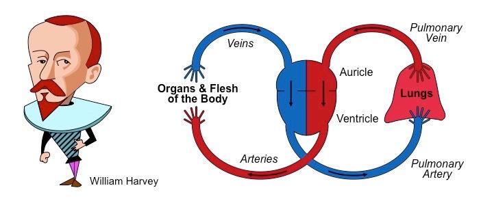 Circulation bioninja harvey circulation ccuart Images