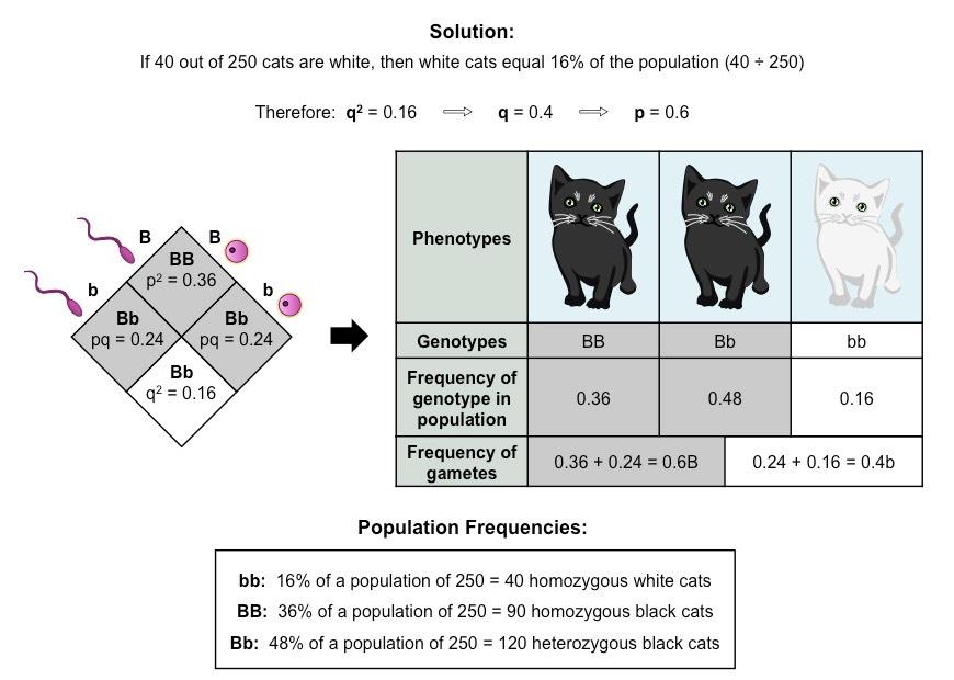 Hardy-Weinberg Principle | BioNinja