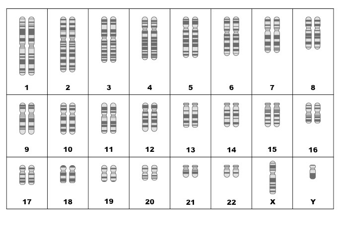 Biology Karyotype Worksheet Answers Key - Nidecmege