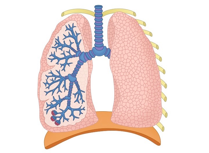 Lung structure bioninja click on the diagram to show hide labels ccuart Choice Image