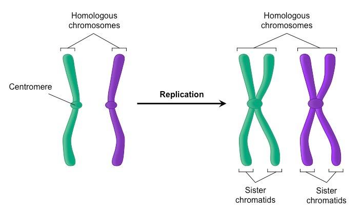 Environment vs genetics
