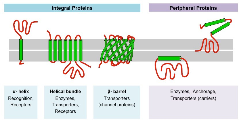 membrane protein structures