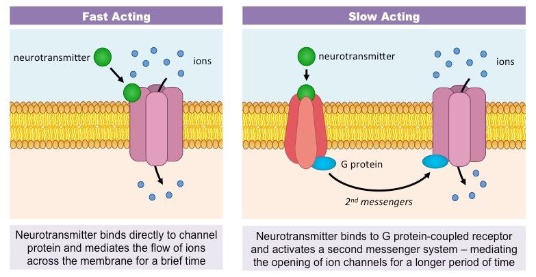 Neuromodulators bioninja neuromodulators ccuart Choice Image