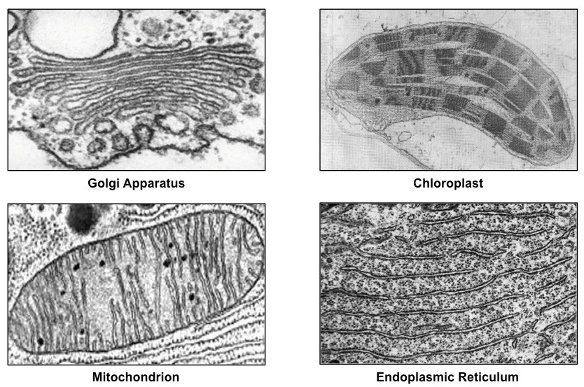 Cell Micrographs