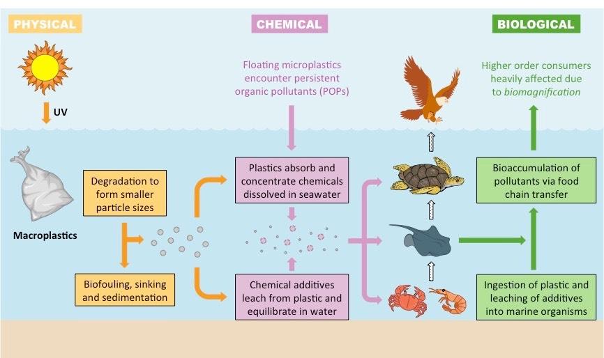 plastic pollution bioninja