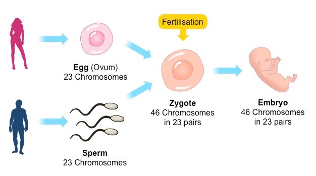 random fertilisation
