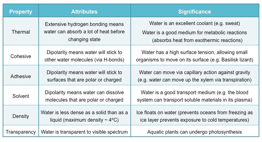 an analysis of the topic of the water as an important substance on earth