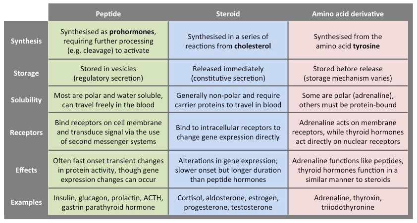 Hormone Comparison | BioNinja