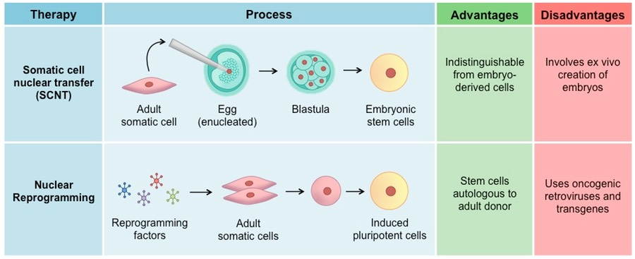 Stem Cell Therapy Bioninja