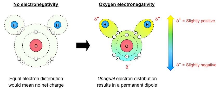 fluorine molecule
